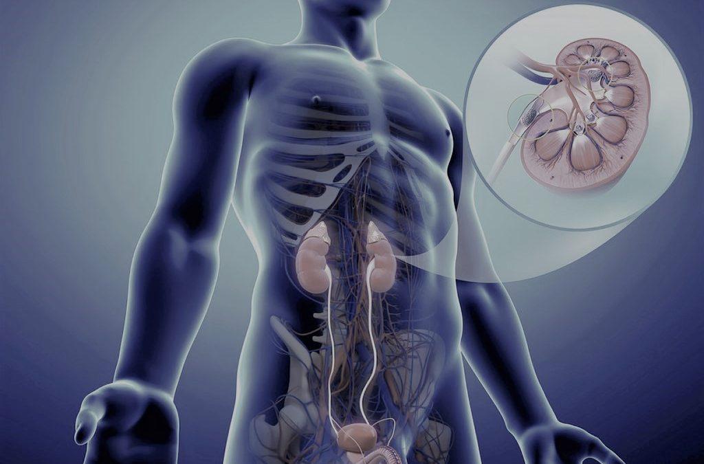 Cuidado del riñón enfocado al paciente oncológico